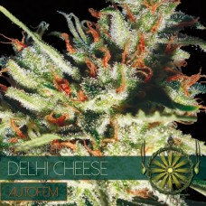 Auto Delhi Cheese Feminised (упаковка 5 шт)
