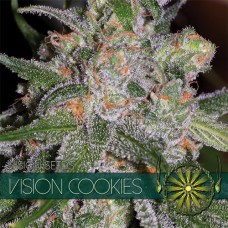 Vision Cookies Feminised (упаковка 3 шт)